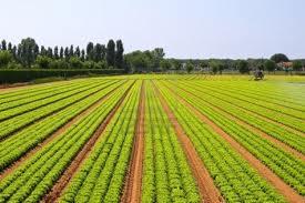 2 Marzo 2013 – La produzione integrata in viticoltura tra ricerca e innovazione tecnologica