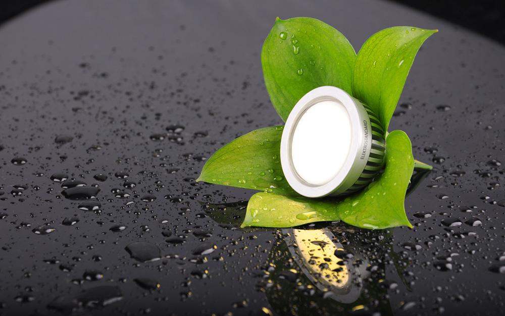 lamp flower as green energy