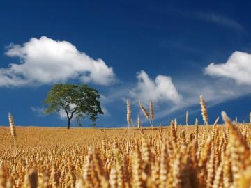 Innovazione tecnologie e agricoltura: se ne parla il 19 Giugno a Pescia