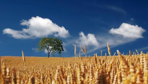 agricoltura estate